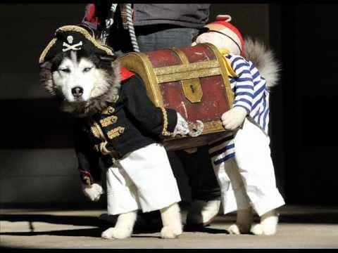 Pirate dog & Pirate dog - YouTube