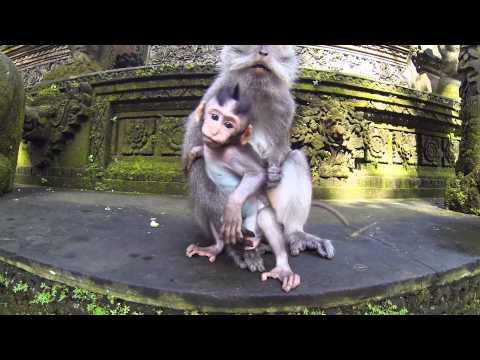 Bali Trip 2014 - GoPro HD