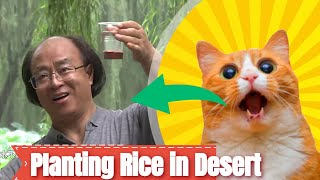Planting Rice in Desert - Newest Rechsand video of June 2019