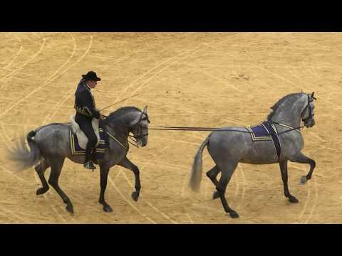 Het pure Spaanse Paarden ras in Show