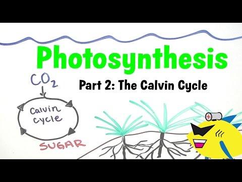 Aquarium Photosynthesis Pt. 2: Planted Aquarium CO2