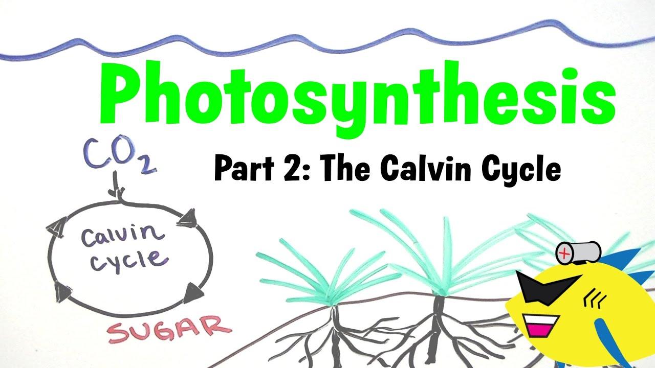 Aquarium synthesis Pt 2 Planted Aquarium CO2