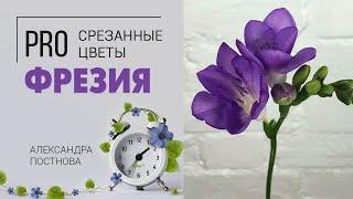 Фрезия - нежный аромат весны. Сезонный цветок и букеты из него. Кому дарить, сколько стоит в букете.