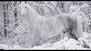 🐴Как на России почти извели лошадей. 🐎 Орловский рысак. 🦓