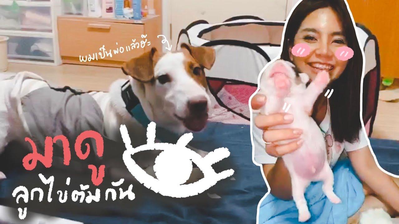 Liveสด | ลูกหมาJackRussell พึ่งเกิด อายุ 14 วัน เป็นไงนะ (เรียลสุดๆ)