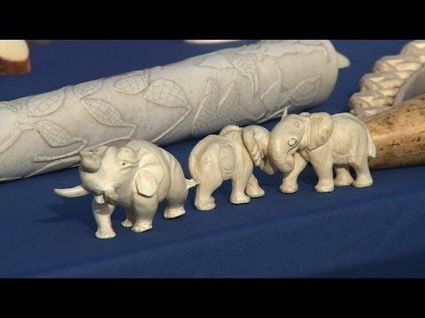 80 kg d'ivoire détruits par une ONG pour protéger les éléphants