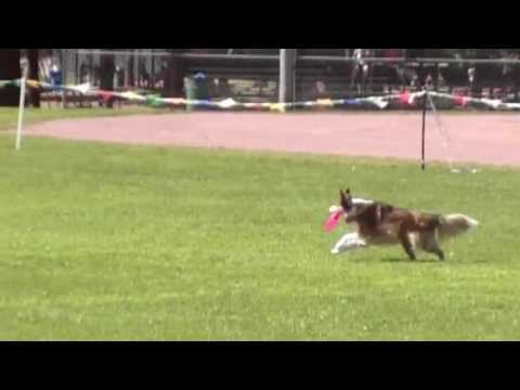 Sheltie Disc Dog Cricket and Robin Moxley FreeStyle Disc Dog Routine 2013 to Good Girl