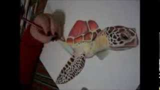 Prismacolor Sea Turtle Drawing