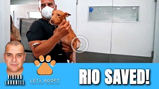 Hope Rescues Rio But Can't Save His Leg - @Viktor Larkhill Extreme Rescue