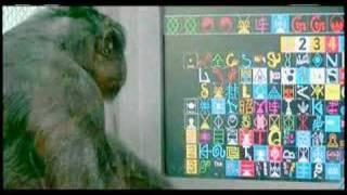 Kanzi with lexigram
