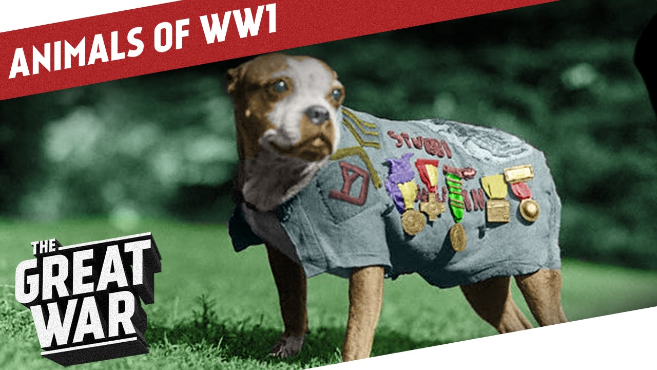 Companions In The Trenches - Animals of World War 1