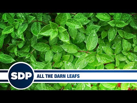 All the Darn Leafs | The Steve Dangle Podcast