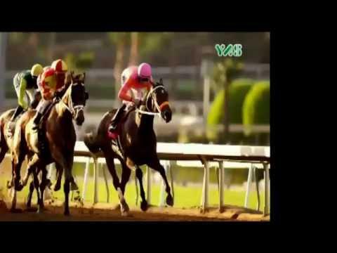 Belgium - Sheikh Zayed Bin Sultan Al Nahyan Cup - 15 August 2016