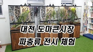 도마큰시장 '파충류 전시체험전', 대전 도마동 대표 캐…