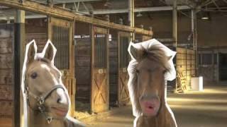 Lee Evans talks about horses