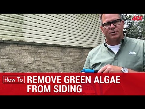 How To Remove Green Algae From Siding - Ace Hardware