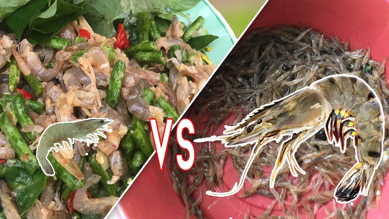 What Is a Prawn Vs Shrimp in Cambodia - Are Shrimp Healthy ...