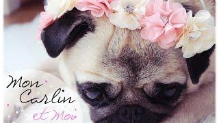 ♥ REVUE ♥ Mon Carlin & Moi