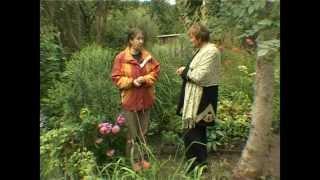 Сад и огород. Лилейники - цветок забвения.(Сад и Огород для Загородной Жизни -- это явление неизбежное! Но теперь Вы можете наслаждаться не только..., 2012-02-23T07:57:40.000Z)