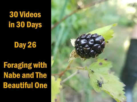 30 Videos in 30 Days Day 26 Foraging with Nabe and the Beautiful One