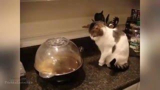 Очень забавно Как  пугаются кошки !!!