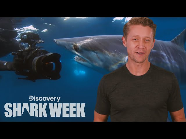 The Best Shark Paparazzi | Shark Week's The Daily Bite