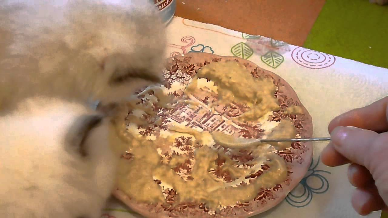 Weaning 4 Week Old Kittens On To Homecooked Wet Kitten Food April 9 2014 Youtube