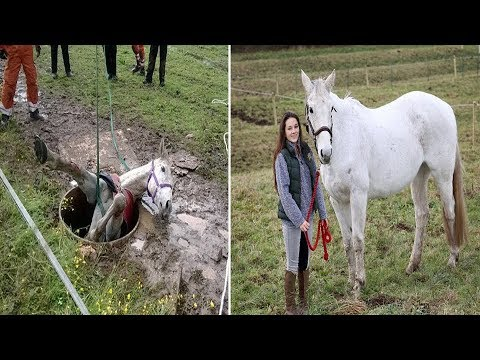 Showjumping Horse Rescue: Horse is winched out of well after getting trapped in metre wide HOLE