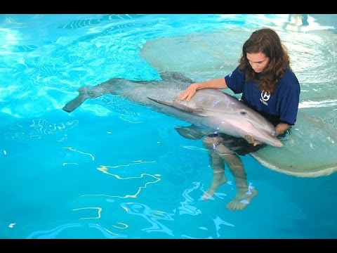 Clearwater Marine Aquarium - Spring internship 2015