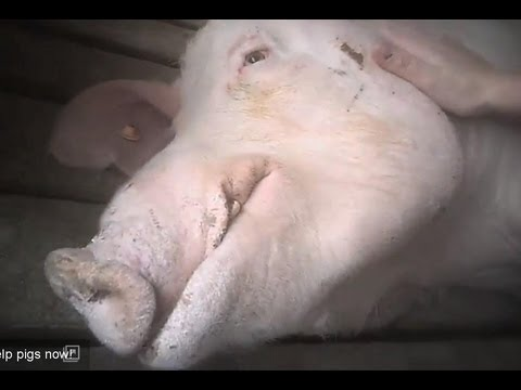5 gross bestiality cases from YouTube · Duration:  3 minutes 22 seconds