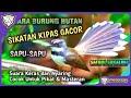 Suara Burung Kipas Sikatan Sapu Sapu Hutan Cocok Untuk Pikat Dan Masteran  Mp3 - Mp4 Download