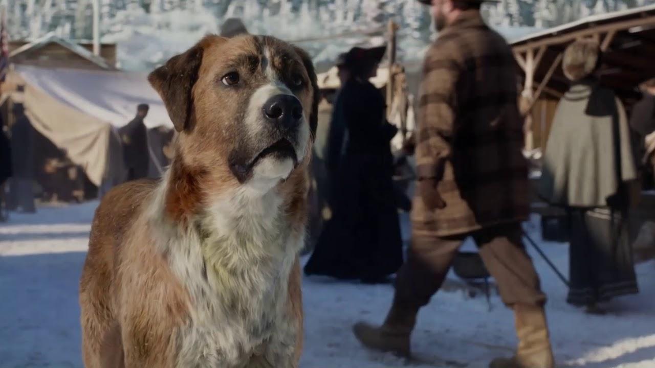 "THE CALL OF THE WILD - Cuplikan ""Thornton Bertemu Buck"" | Di Bioskop 21 Februari 2020"