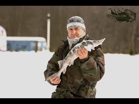 Видео ловля осетра зимой