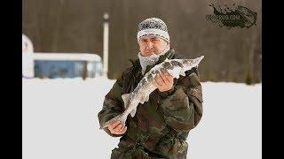 Ловля осетра.Ловля осетра зимой на платном пруду. Зимняя ловля осетра.