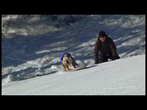 Bulldogs Snowboard at Mountain High