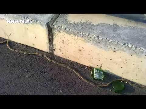 Natural phenomenon - Column Caterpillars