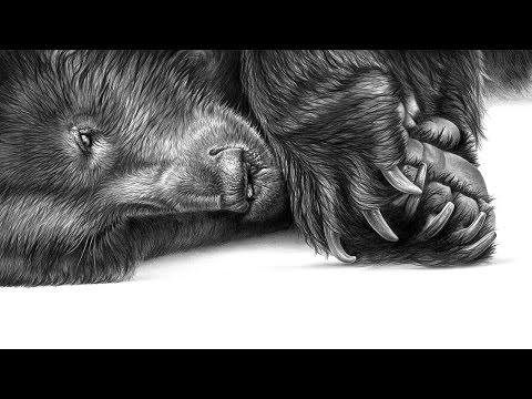 'Oliver Bear' a tribute in pencil by Richard Symonds