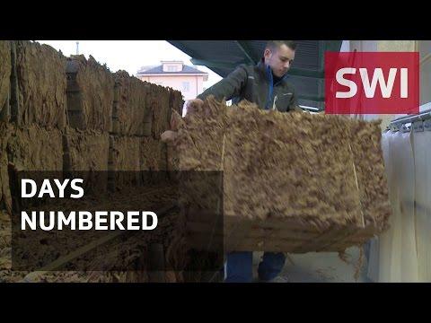 Last Swiss tobacco factory faces closure