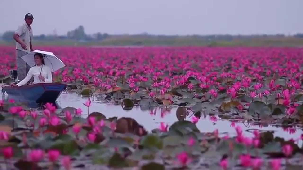 ทะเลบัวแดง -The Red Lotus Sea, The Isan Project ft. Errol Reid - Beautiful Heart