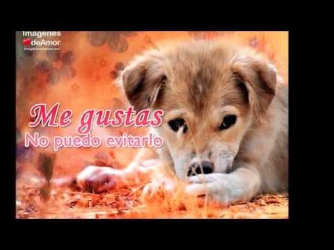15 Imagenes De Perritos Con Frases De Amor Super Tiernas Youtube