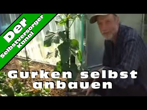 Der richtige Anbau von Schlangengurken - YouTube