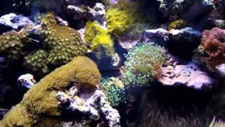 Reef Tank With Metal Halide