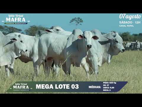 MEGA LOTE 03
