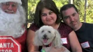 Florida Poodle Rescue Picnic 2011