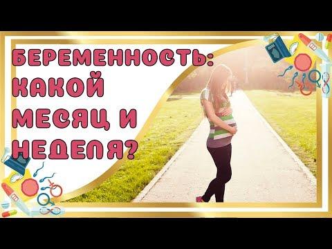 Какая Неделя и Месяц беременности?