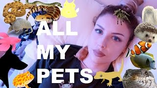 Download ALL OF MY PETS IN ONE VIDEO (I know, I have a lot) Mp3 and Videos