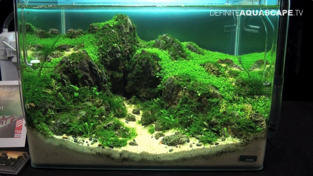 The Art Of The Planted Aquarium 2015 Dennerle Scaper S Tank Nano Compilation Pt 1 Youtube