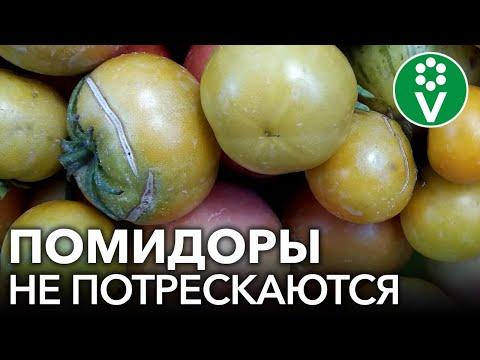 Вопрос: Как предотвратить гниение помидоров?