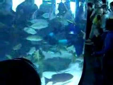 Kemah Boardwalk Aquarium Youtube