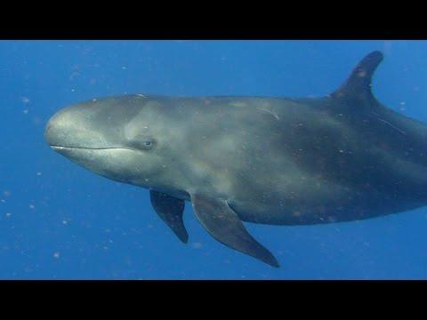 Diving Ha'apai, Tonga, South Pacific